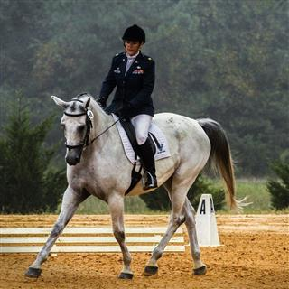 نادي زفتا للفروسية Zefta Horse Riding Club